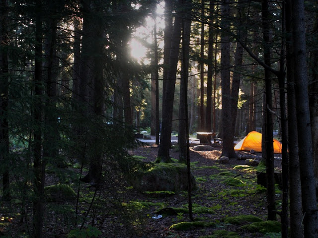 Gorgeous morning light on our neighbors tent at Blackwoods Campground in Acadia.