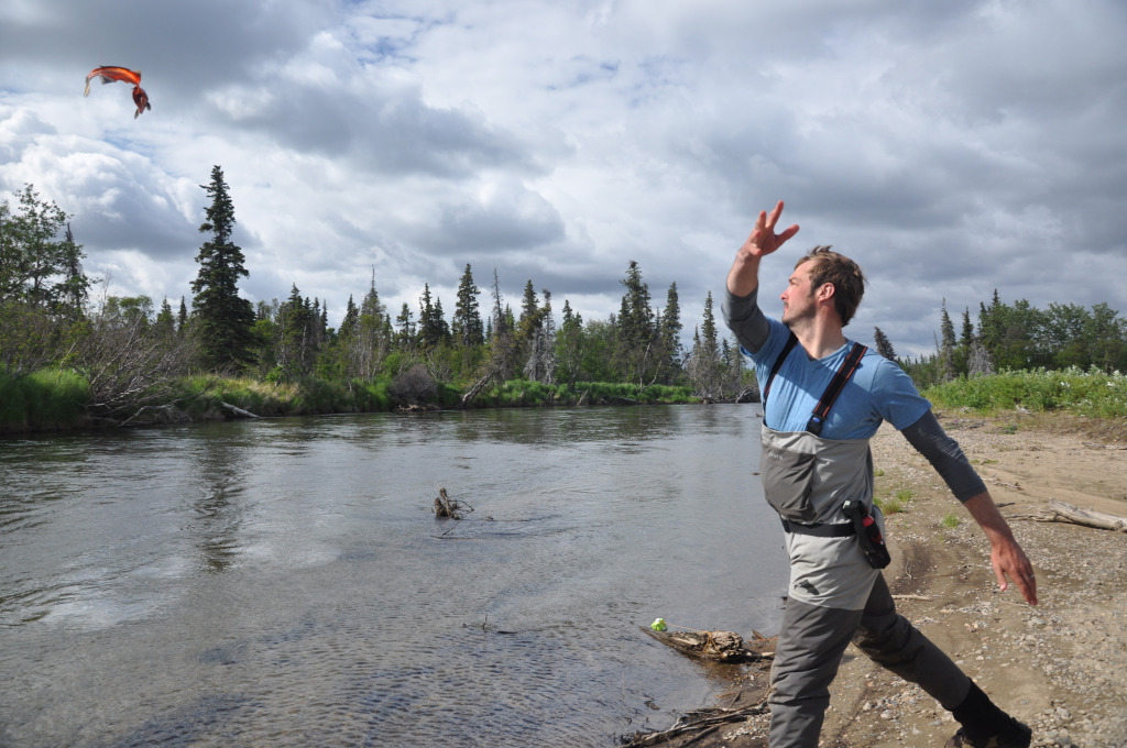Barton tossing a chum carcass on the Stuyahok River. (Photo credit: Mark Rutherford)