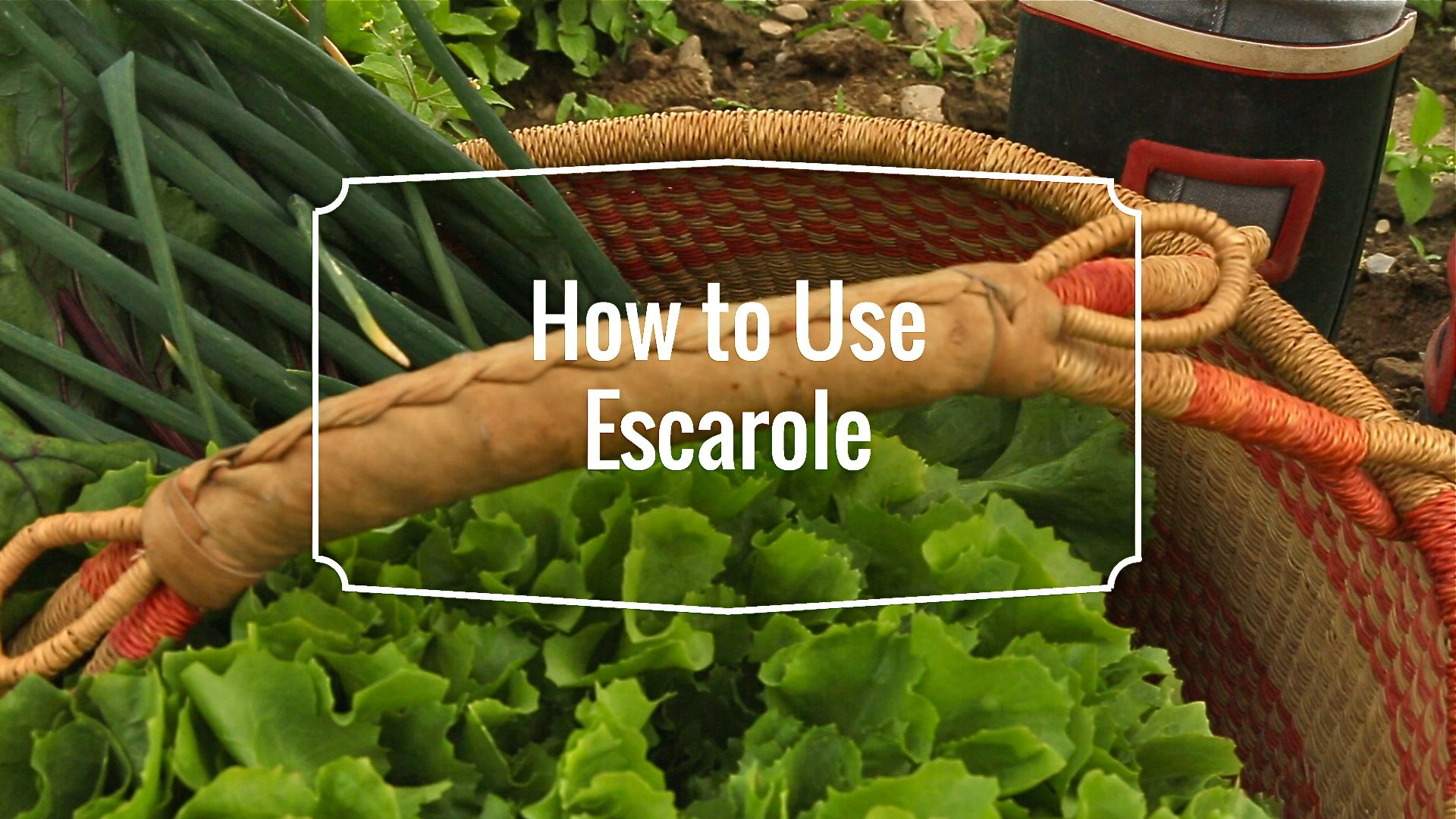 How to use Escarole