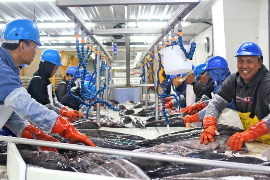 Workers processing black cod in a seafood processing plant in Sitka, Alaska